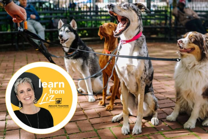 dogs on a leash with overlay of learn from liz